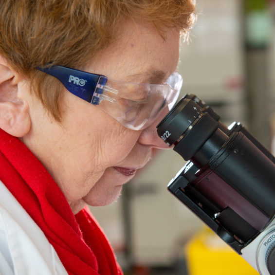 Female cancer researcher with safety glasses looking through a microscope
